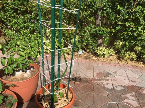 Gardening Forum - fruit trellis help gardening forums