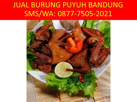 Jual Bibit Ayam Petelur Di Bandung 0877 7505 2021 xl jual burung puyuh di bandung