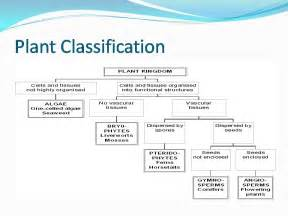 classification of plants group of plants