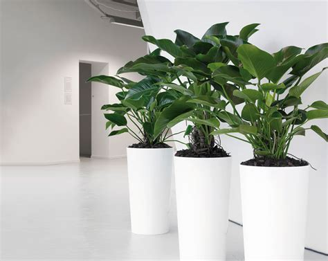 Floor Planters Indoor by The Designer Range Phs Greenleaf Phs