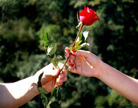 love rose flowers flower hd wallpapers images pictures roses flower in hand love hd wallpaper wallpaper gallery