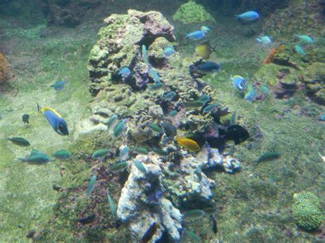 vasca pesci vasca di pesci tropicali picture of genoa aquarium