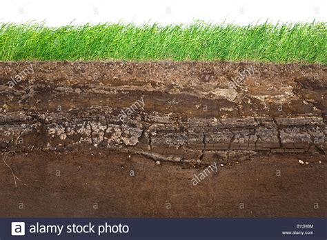 Soil Cross Section cross section of green grass and underground soil layers beneath stock photo royalty free image