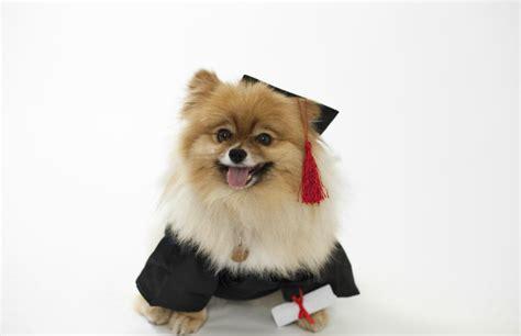 groomer salary description of a professional groomer qc pet studies