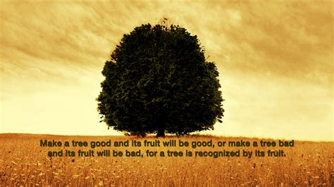 judge a tree by its fruit fruit christian wallpapers