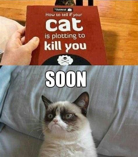 How To Make A Grumpy Cat Meme - grumpy cat fav grumpy cat pics pinterest