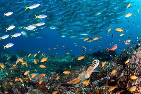 dive the world 22 best scuba diving destinations in the world