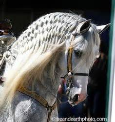 hairstyles for with horseu hair lines 1000 images about horse hair styles on pinterest horses