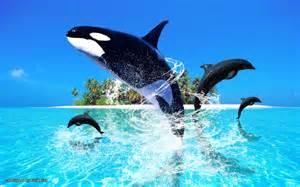 Meer insel springen delphine tiere hd wallpapers wallpaper picture