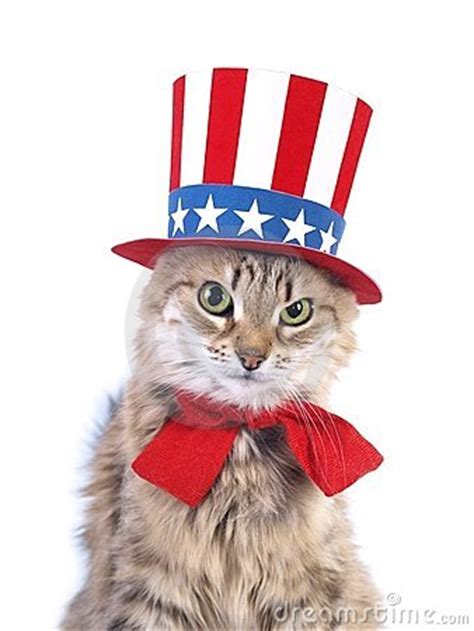 cute patriotic cat royalty  stock images image