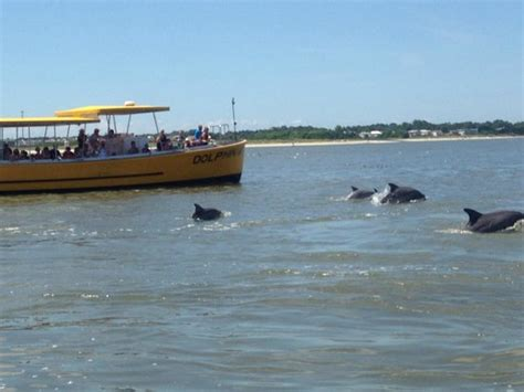 fan boat tour tybee island dolphins swimming by picture of captain mike s dolphin