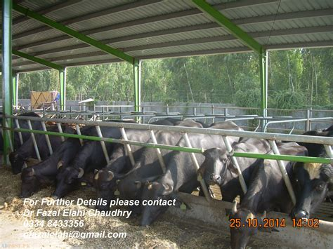 Shed Design For Dairy Farm by Modern Shed Design Dairy Farm Pakistan Kasur