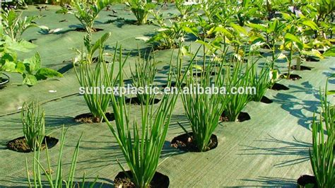 garden mat to prevent weeds garden ftempo