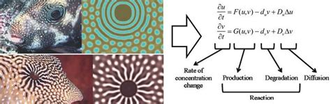 pattern formation in animals is based on 23 best images about alan turing on pinterest the