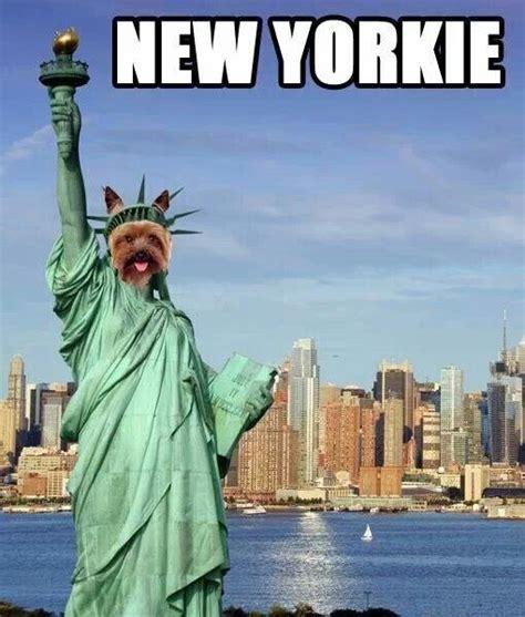 New York Meme - welcome to memespp com