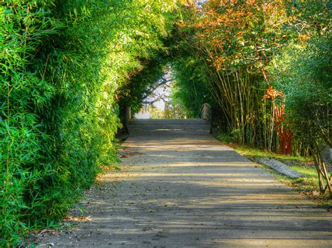 pathway pictures louisiana purchase gardens and zoo pathway photograph by
