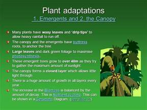 what are some plant adaptations in the tropical rainforest tropical rainforests climate distribution of rainforest