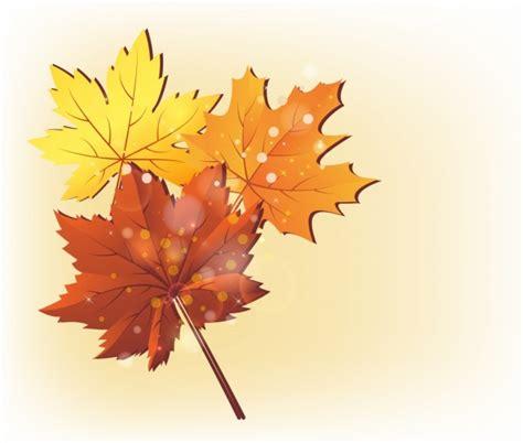 wallpaper daun keren daun musim gugur latar belakang warna warni dekorasi ikon