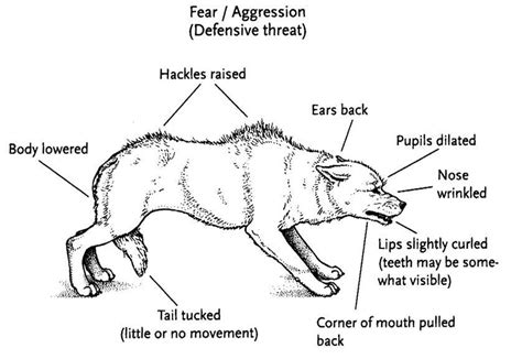 how to an aggressive how to recognise fear aggression in a s language leadchanges