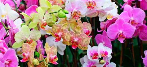 imagenes de jardines con orquideas plantar orqu 237 deas en tu jard 237 n