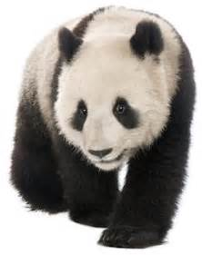 panda print outs china topic for