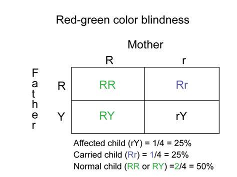 color blindness punnett square unit 7 genetics