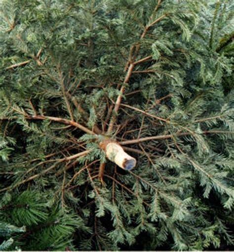 weihnachtsbaum selber schlagen nähe bonn baum agrar aktuell de