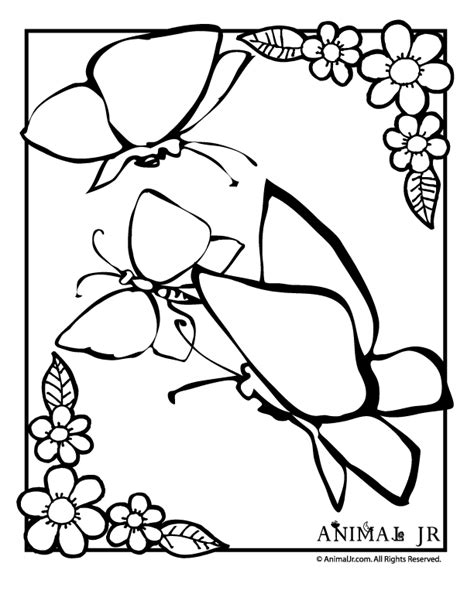 coloring pages of flower borders butterfly coloring page with flower border zentangle