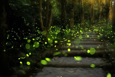 outdoor lights that don t attract bugs how to attract fireflies to your backyard mnn mother