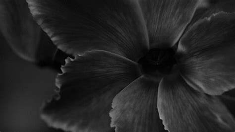 wallpaper black with flowers black and white flowers wallpaper 12 background wallpaper