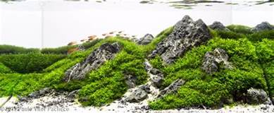 the iwagumi style planted tank aquascape awards