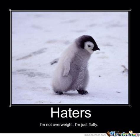 Funny Penguin Memes - penguin haters meme fun pinterest art penguins