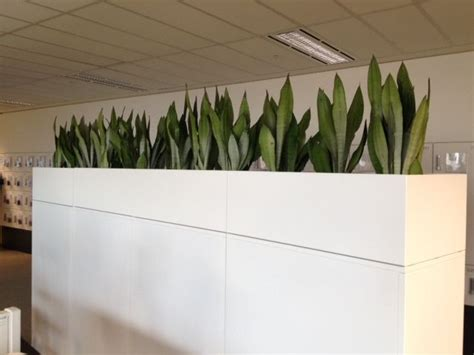 plant partition visit our gallery our gallery view our services