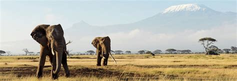 Find In Kenya Kenya Safaris Safaris In Kenya Kuoni