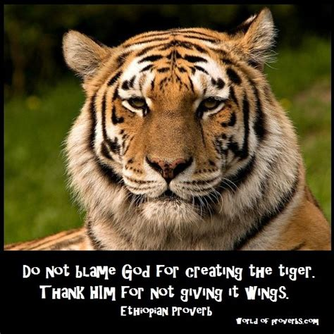 tiger quotes inspirational quotes about tigers quotesgram