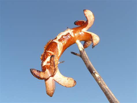 kostenloses foto bratwurst wurst rote rote wurst