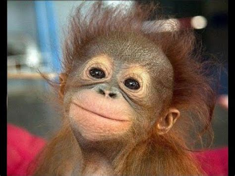funny monkeys   Cute and funny baby monkey   YouTube