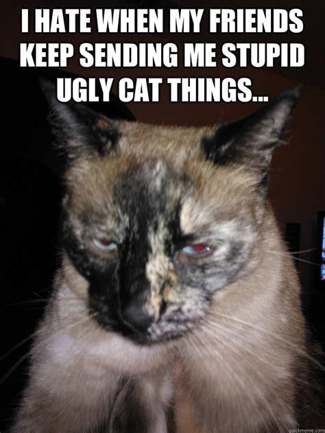 Ugly Cat Meme - ugly cat memes quickmeme