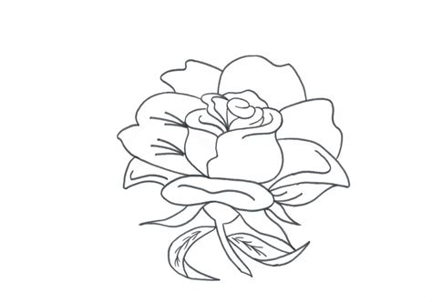 coloring pages of real roses 89 rose coloring pages border rose flower leaves