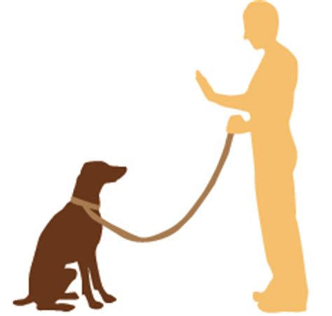 how to teach puppy to stay teach your to stay pawsome tricks beefeaters
