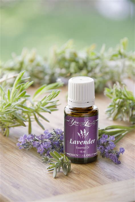 Living Lavender pregnancy and essential oils