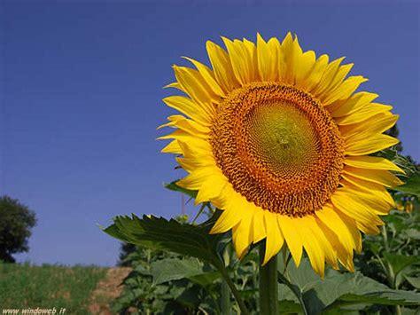 foto ci di fiori sfondi fiori singoli