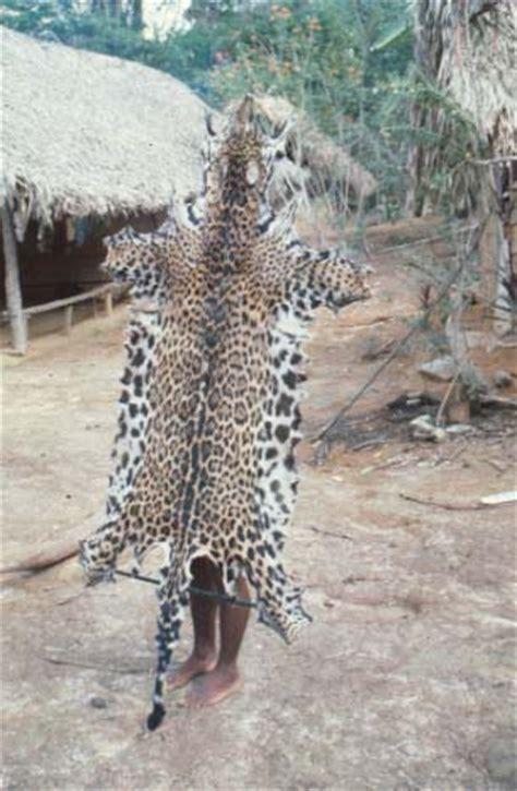is jaguar endangered prance cis lecture