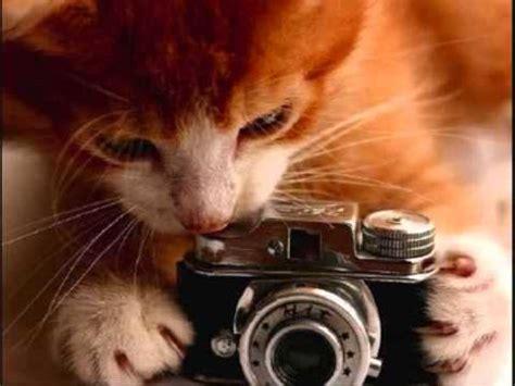 imagenes de ojos tiernos fotos de gatitos tiernos y graciosos youtube