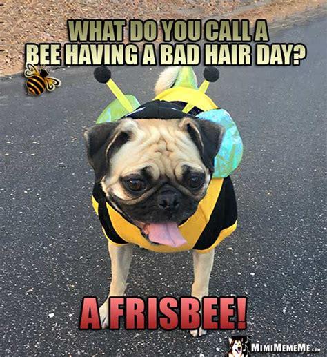 pug jokes pug bee jokes pug wearing bee costume humor meme pg 1 of 7 mimimememe