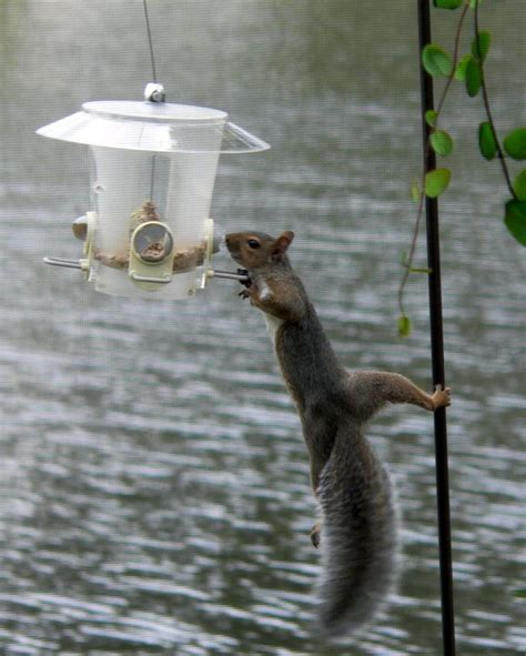 how to deter squirrels at bird feeders help mother