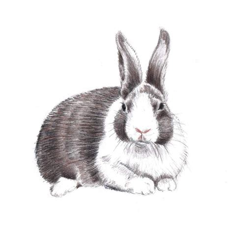 Sheep Home Decor by Rabbit Drawing Art Original Colored Pencil Bunny Brown By