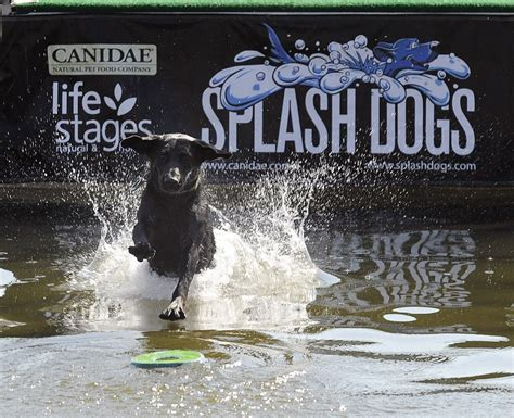 splash dogs soldier hollow sheep chionship