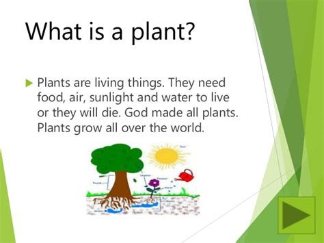 what is a planter plants powerpoint lesson