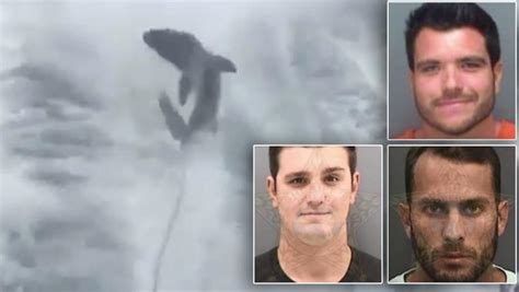 shark dragged behind boat siesta key 3 boaters charged in case of shark dragging video that